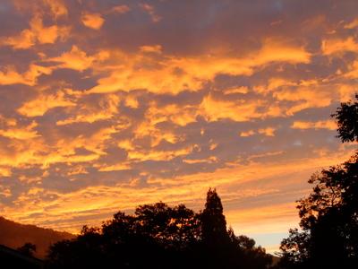 2013_09302013庭の秋の朝0018.JPG