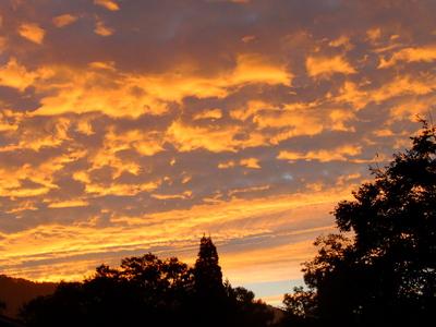 2013_09302013庭の秋の朝0021.JPG