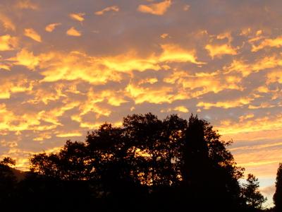 2013_09302013庭の秋の朝0024.JPG