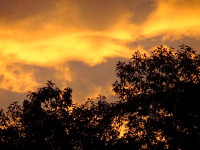2013_09302013庭の秋の朝0025.JPG