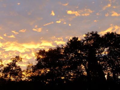 2013_09302013庭の秋の朝0026.JPG