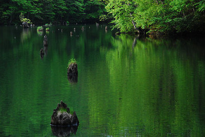 新緑の曲沢沼.jpg